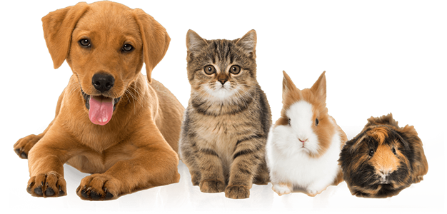 pets_small